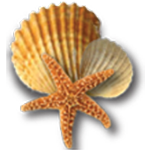 denizsever